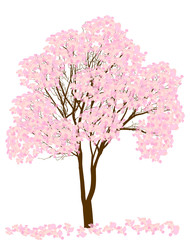 pink spring blossoming tree isolated on white