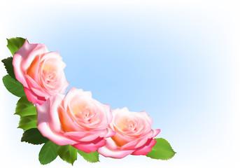 three light rose corner on blue background