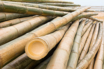 Front bamboo background