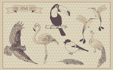 Birds vector set. Hand drawn bird. Vintage design. Vector