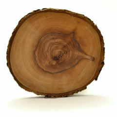 cerchi tronco
