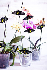 Tropical butterfly on the orchid.