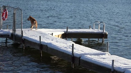 Dog Slips on Snowy Dock