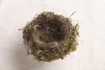 nido di passeraceo