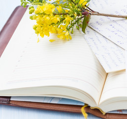 Notebook with blooming tree branch.