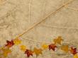 canvas print picture - Blattstruktur Herbstmotiv