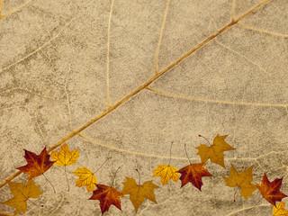 Blattstruktur Herbstmotiv