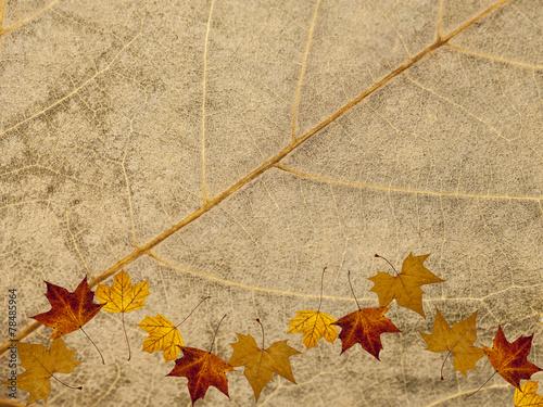 canvas print picture Blattstruktur Herbstmotiv