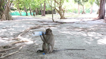 monkey sits on ground and drinks water from bottle among trees i