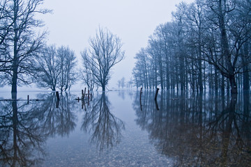 Winter reflection of the flooded forest
