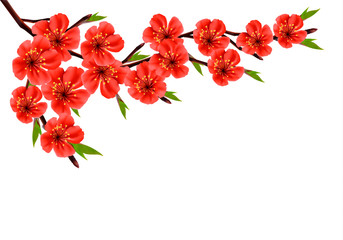 Spring background with blossom branch of red flowers. Vector