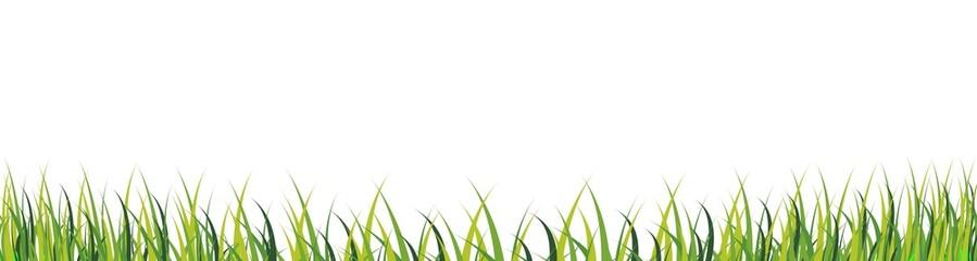bordure d'herbe