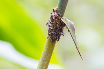 Close up of  ants on plant