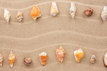 Stripe of sea shells lying on the sand