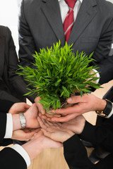 Businesspeople Hands Holding Plant