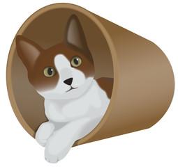 トンネルに入った猫