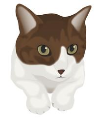 見つめる猫 茶トラ