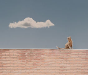 cat on the top of a bricks wall