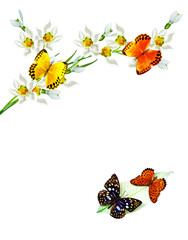 branch of flowers and butterflies isolated on a white background