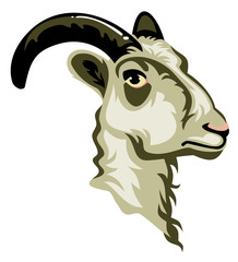 Vector image of a goat head isolated on a white background