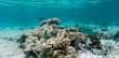 Leinwanddruck Bild - Korallenriff mit Fischen