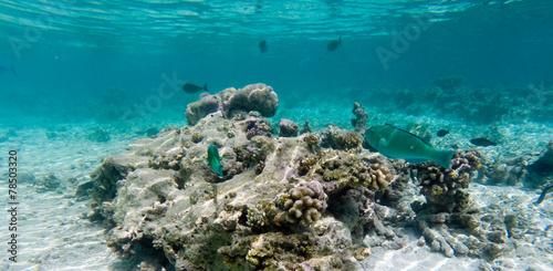 Leinwanddruck Bild Korallenriff mit Fischen