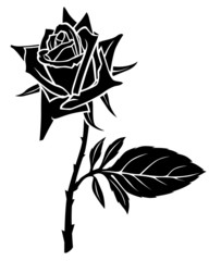 Silhouette of beautiful flowering rose