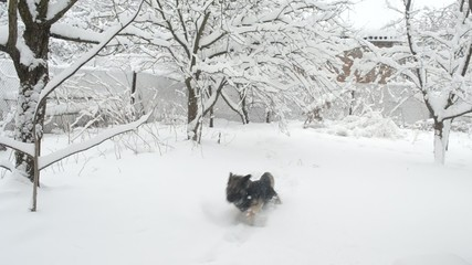 Cheerful active dog in snow in countryside