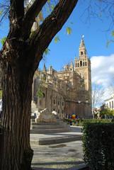 Giralda, catedral, árbol, tronco, Sevilla, Andalucía