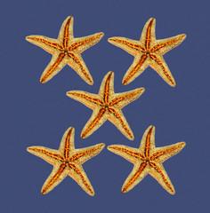 stelle marine su sfondo blu