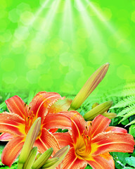 Summer landscape of lily flowers and ferns