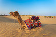 canvas print picture - Camels in desert