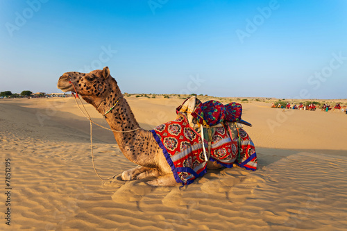 canvas print picture Camels in desert