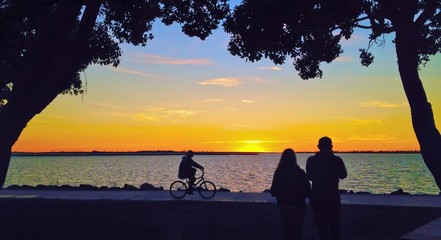 Sunset Silhouette Bicycle Riding in Urban Park along Waterfront
