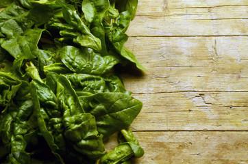 Spinacia oleracea ホウレンソウ Шпинат огородный Spinaci