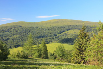 Nature. Forest mountain landscape in the summer