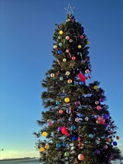 Christmas Tree at Beach, Ocean Beach, San Diego, California, USA