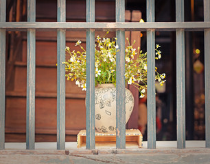bouquet of daisies in a vase in the window