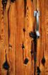 canvas print picture - alte Holztür mit Schlangenkopf Drücker oder Öffner