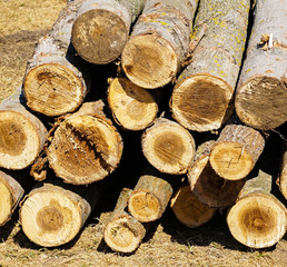 Cut-out tree trunks