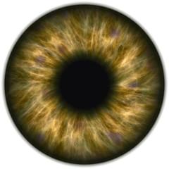 Light chestnut eye