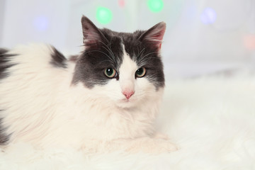 Adorable cute cat lying on carpet, close up