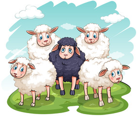 Five sheeps