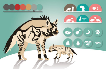 striped hyena infographic illustration