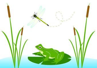 grenouille dans sa mare