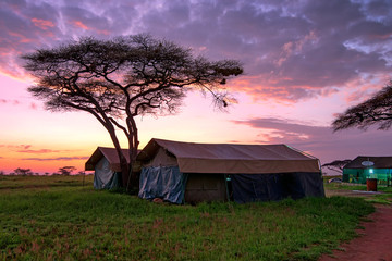 Tented camp in savannah