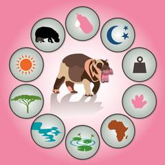 baby hippo infographic