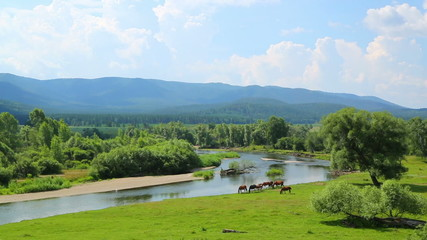 summer landscape with river between mountains and grazing horses
