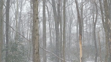 snow falling through forest