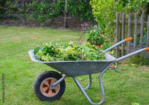 Entretien jardin ramassage herbe dans brouette photo for Tarif entretien jardin